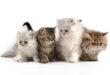 Как выбрать кошку?