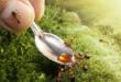 Как избавить квартиру от красных муравьев?